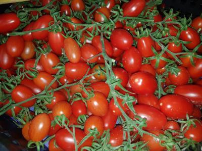 CASI, la mayor cooperativa hortofrutícola de Almería