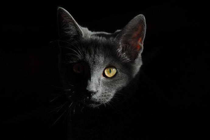 Los gatos domésticos están presentes en todos los continentes excepto en la Antártida