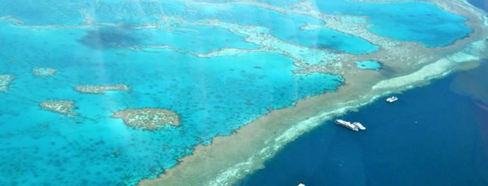 """""""Los arrecifes están muy enfermos, pero aún podemos curarlos"""""""