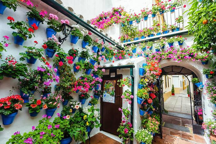 Patios de Córdoba: el Alma de las flores