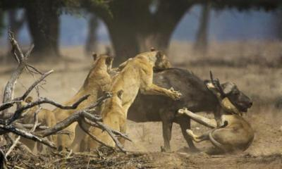 Nuestras hienas de cada día