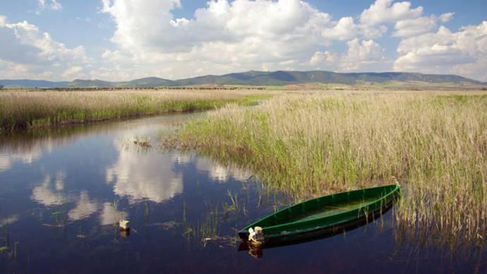 El Parque Nacional de Daimiel, obligado a contratar un servicio privado para eliminar 40 toneladas de peces invasores