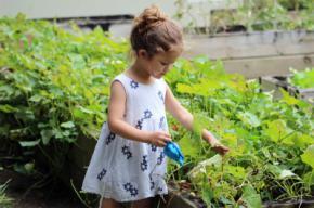 Las principales ventajas del césped artificial sobre el natural en nuestro jardín