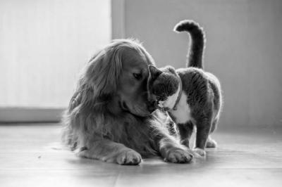 Cuidados para mascotas en tiempos de coronavirus