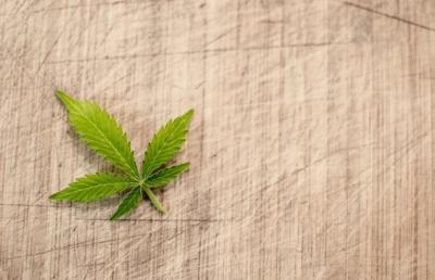 Flores CBD: la marihuana medicinal y completamente legal
