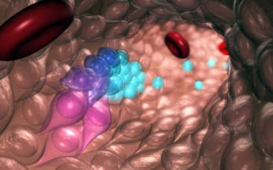Las células madre y progenitoras de sangre emergen de células endoteliales hemogénicas durante el desarrollo embrionario normal. Las células azules (izquierda) emergen de las células progenitoras y hematapoyéticas emergentes