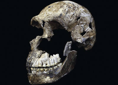 'Neo', cráneo de Homo naledi de la cámara Lesedi