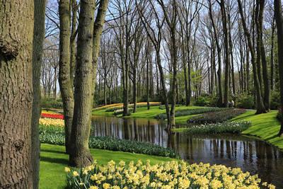 Keukenhof, tulipanes en el más bello jardín de Europa