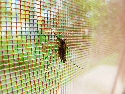 Calor, plagas, molestias… Cómo evitar que el verano nos supere