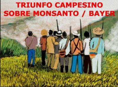 Triunfo campesino sobre Monsanto / Bayer