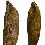 Dientes del fósil encontrado