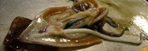 Ejemplar de calamar con un pene gigante.